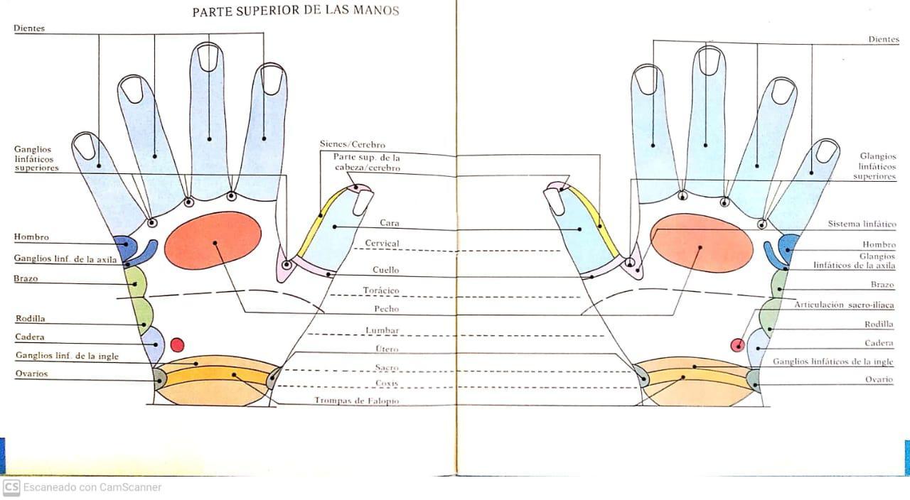 Reflexologia 3 -2